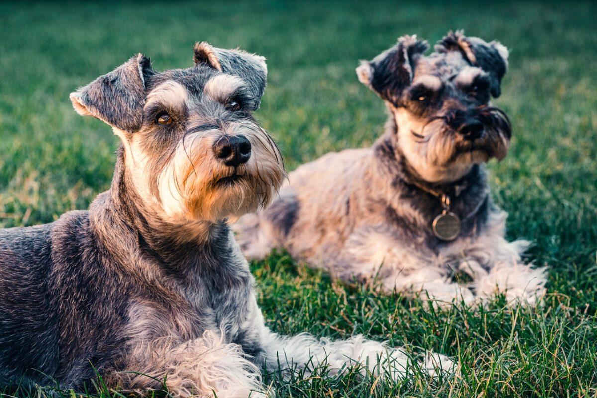 Spezielles Hundefutter für sensible Hunde